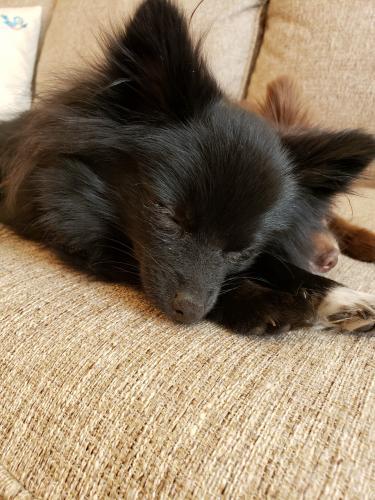 Lost Female Dog last seen Harpersville rd, Newport News, VA 23601
