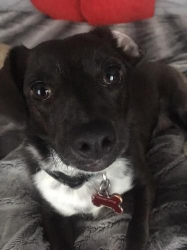 Lost Male Dog last seen 7th St and Royal Palm, Phoenix, AZ 85020