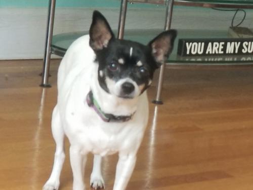 Lost Female Dog last seen Near Buckingham St & Jersey Ave, Norfolk, VA 23513, Norfolk, VA 23513