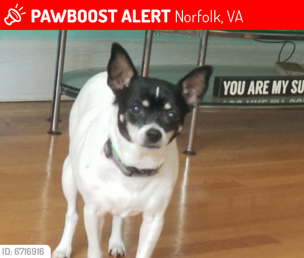 Lost Female Dog last seen Near Buckingham St & Jersey Ave, Norfolk, VA 23513, Norfolk, VA 23513