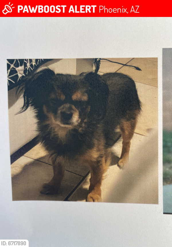 Lost Male Dog last seen McRae way and 21st Ave, Phoenix, AZ 85027