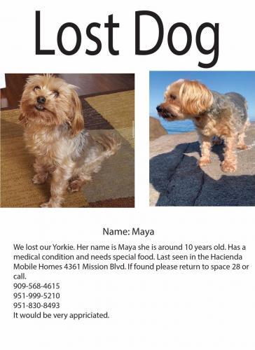 Lost Female Dog last seen Hacienda mobile home , Montclair, CA 91762