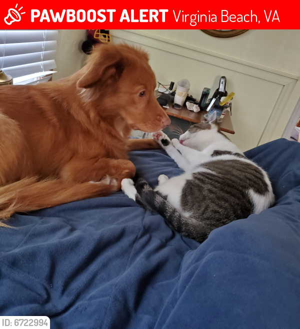 Lost Male Cat last seen Near 21st , Virginia Beach, VA 23451