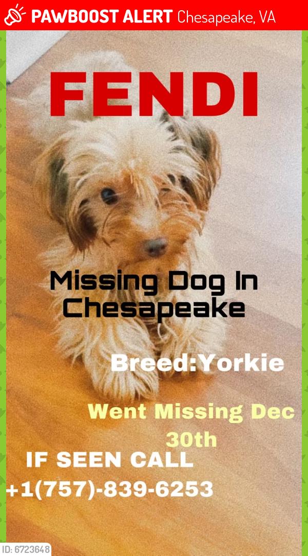 Lost Male Dog last seen Bainbridge Chesapeake va, Chesapeake, VA 23324