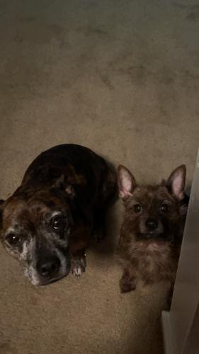 Lost Male Dog last seen Regency drive , Virginia Beach, VA 23454