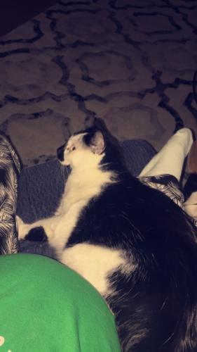Lost Male Cat last seen Old forge and vanburen , Virginia Beach, VA 23452