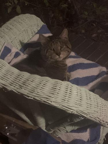 Found/Stray Unknown Cat last seen Near midway ave , Chesapeake, VA 23324