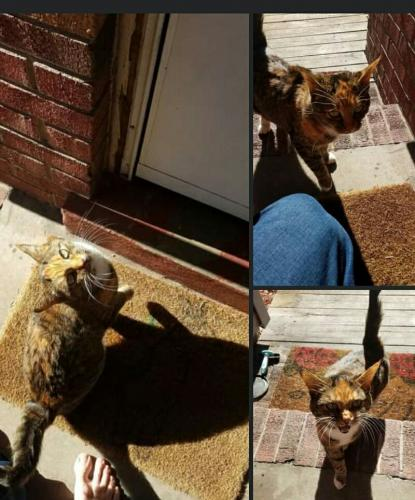 Found/Stray Unknown Cat last seen Rivercrest Dr. Portsmouth, Portsmouth, VA 23701