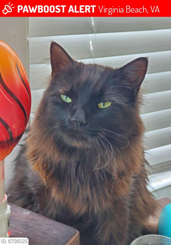 Lost Male Cat last seen Merton Court and Montrose drivr, Virginia Beach, VA 23464