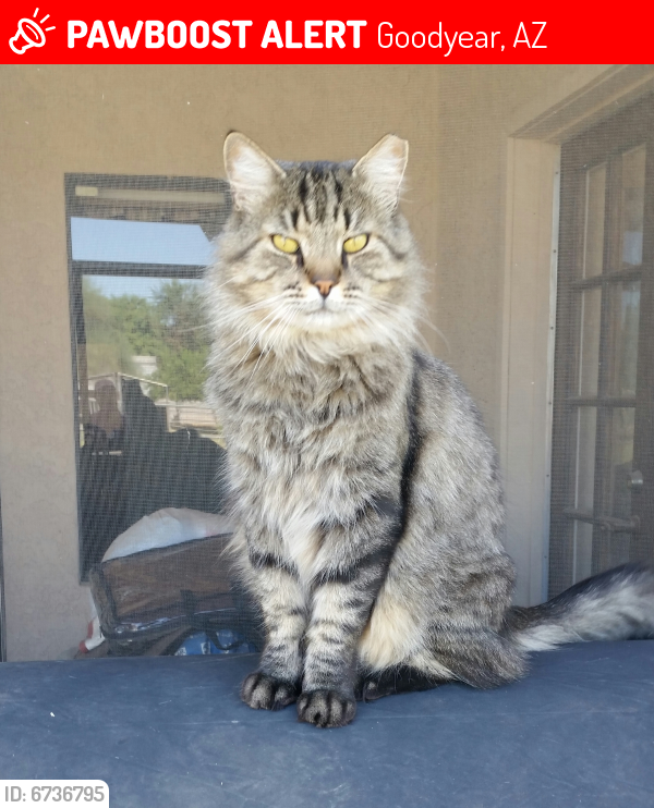Lost Male Cat last seen 165th Ave and Sarival Ave, Goodyear, AZ 85338