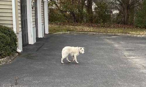 Found/Stray Unknown Dog last seen Magnolia Chase Apartments, Virginia Beach, VA 23464