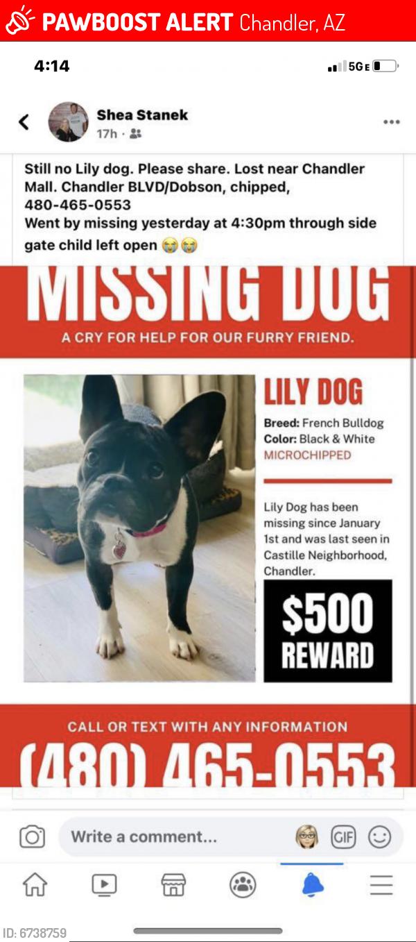 Lost Female Dog last seen Castile Neighborhood, Chandler, AZ 85224