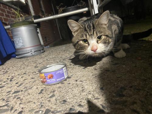 Found/Stray Unknown Cat last seen Across 16th Avenue School, Elmwood Park, NJ 07407