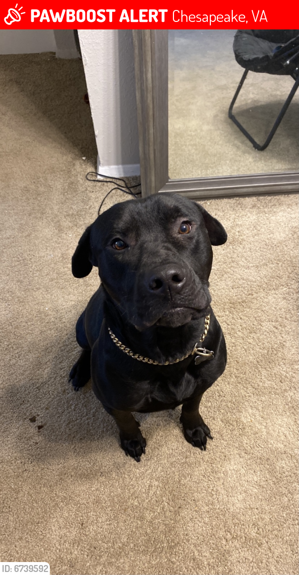 Lost Male Dog last seen Last seen near a factory next to a stop sign , Chesapeake, VA 23323