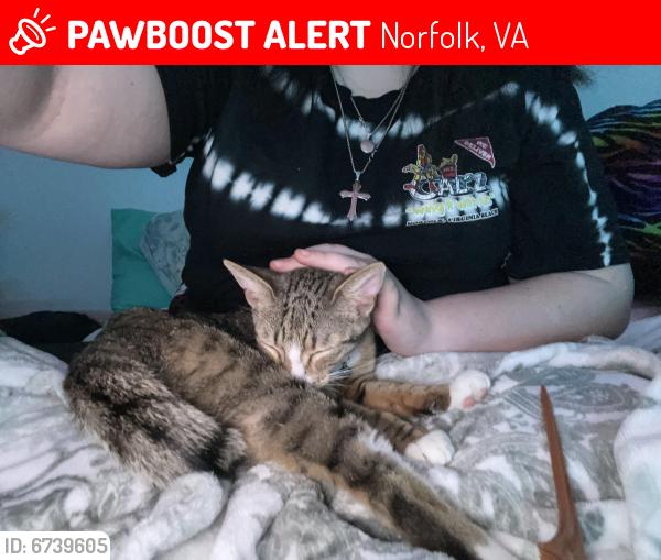 Lost Female Cat last seen B, Norfolk, VA 23518