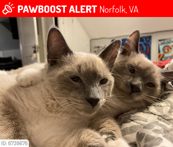 Lost Male Cat last seen Dumont Ave and Granby , Norfolk, VA 23505