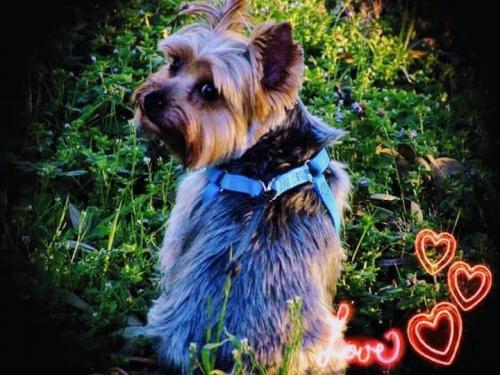 Lost Male Dog last seen Ellis, Virginia Beach, VA 23455