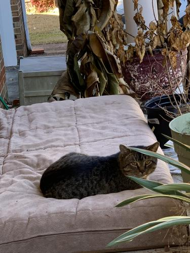 Found/Stray Male Cat last seen Saber , Chesapeake, VA 23322