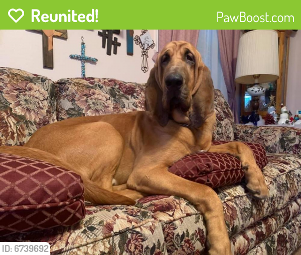 Reunited Male Dog last seen Dulin Lane, Locust Grove, VA 22508