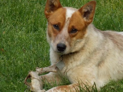 Lost Male Dog last seen Near 50th St SE, Rochester, MN 55904