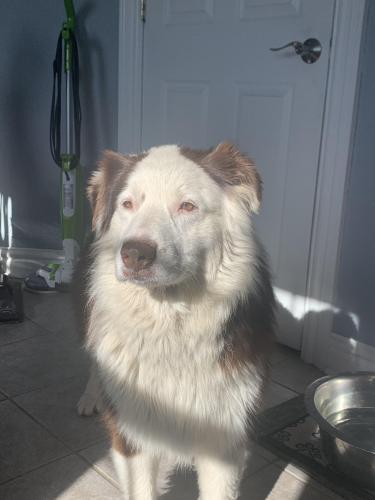 Found/Stray Male Dog last seen Stuart Circle , Norfolk, VA 23502