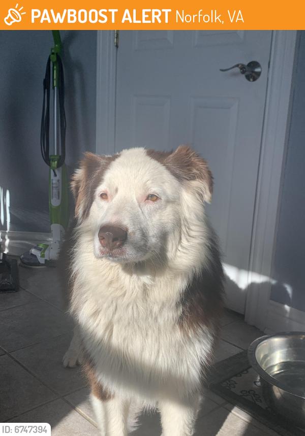 Rehomed Male Dog last seen Stuart Circle , Norfolk, VA 23502