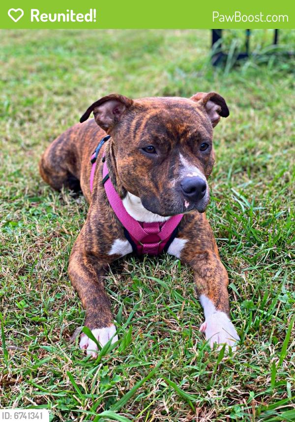 Reunited Female Dog last seen Near hullview ave, Norfolk, VA 23503