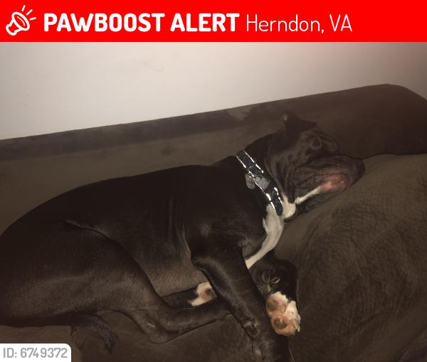 Lost Unknown Dog last seen Near Devon Street Herndon VA 20170, Herndon, VA 20170