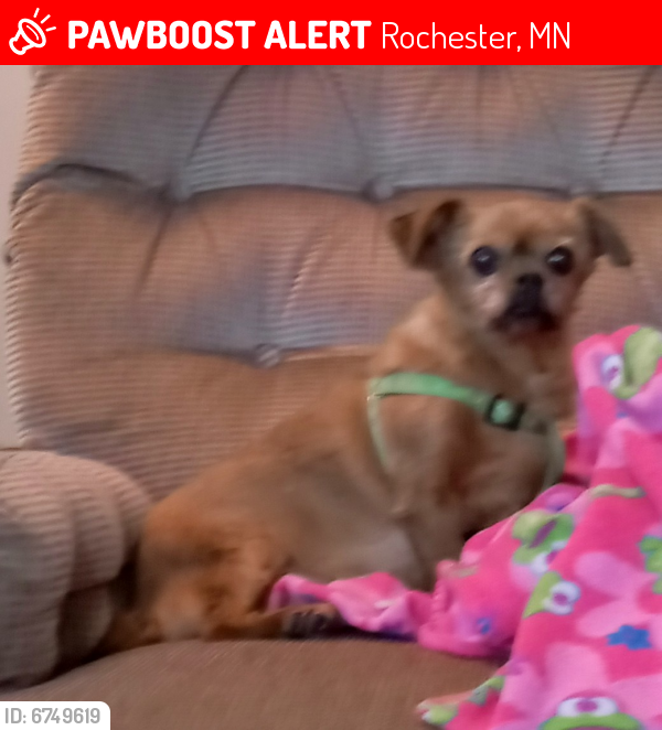 Lost Female Dog last seen Eastwood Road SE, Rochester, MN 55904