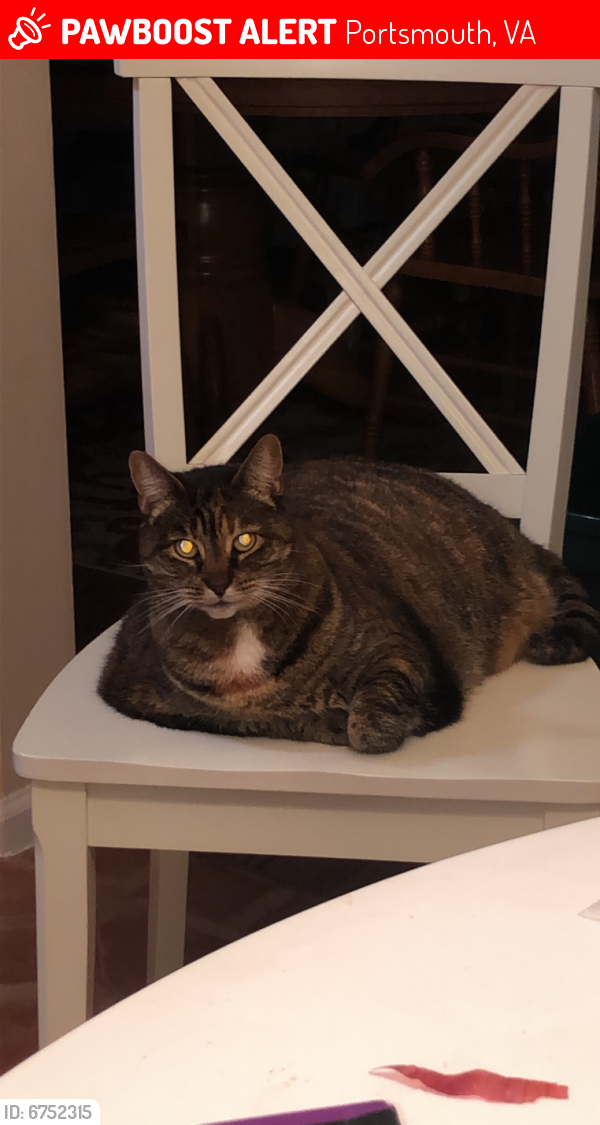 Lost Female Cat last seen River pointe, w Norfolk rd, Portsmouth, VA 23703