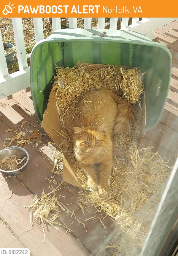Found/Stray Unknown Cat last seen Near Buckingham Street , Norfolk, VA 23513