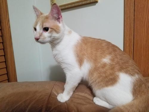 Lost Male Cat last seen Stewartville, MN Trailer Court, Stewartville, MN 55976