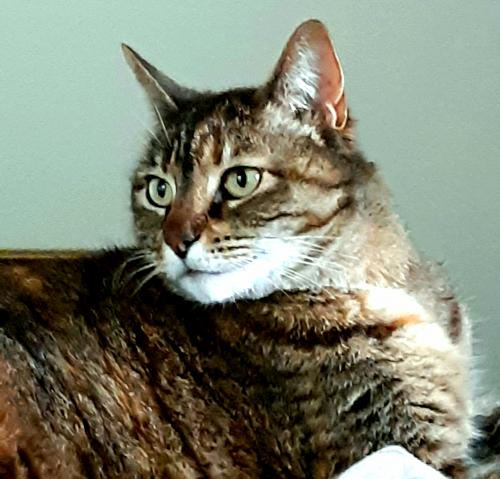 Lost Female Cat last seen River Reach and Point of View, Portsmouth, VA 23703
