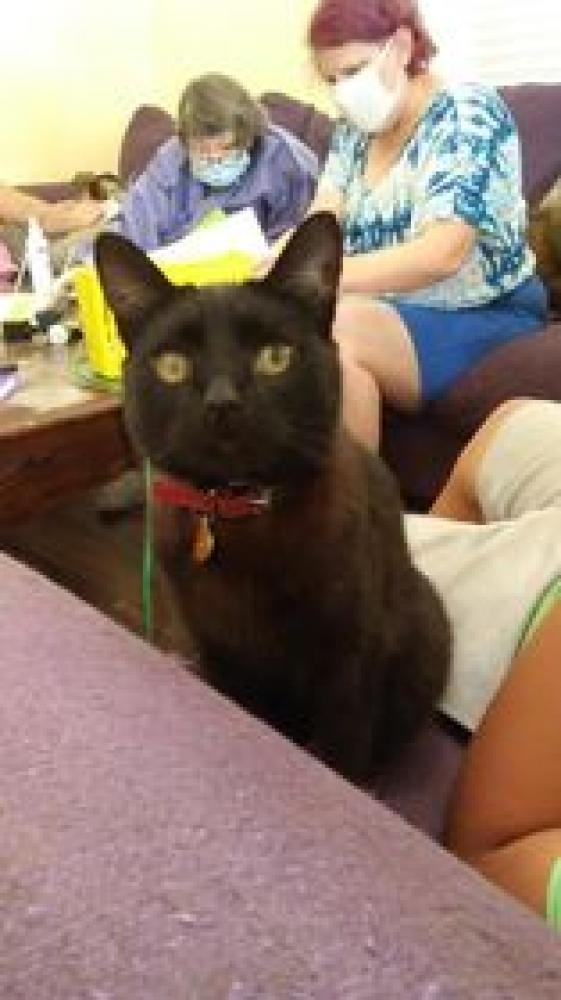 Lost Male Cat last seen 75th Ave and Peoria Ave , Peoria, AZ 85345