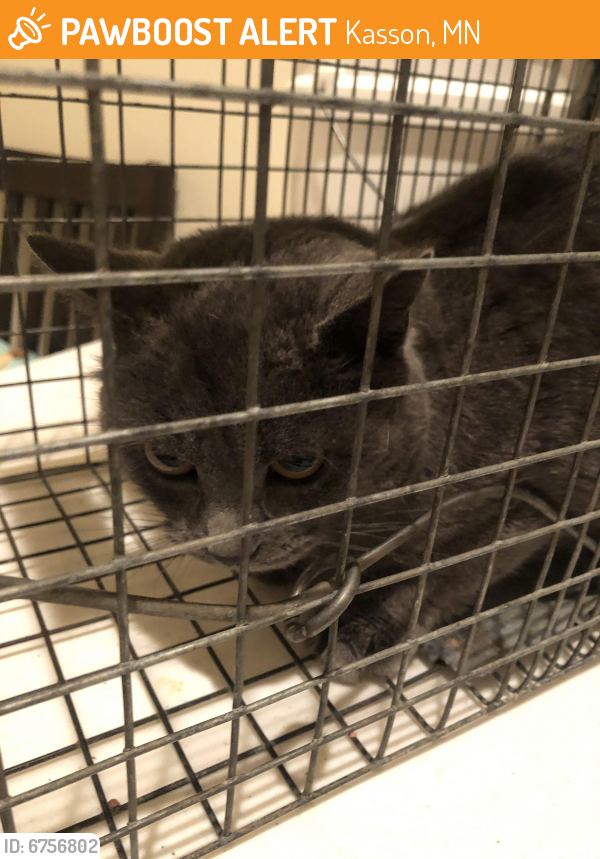 Found/Stray Unknown Cat last seen 13th Ave NW and 5th , Kasson, MN 55944