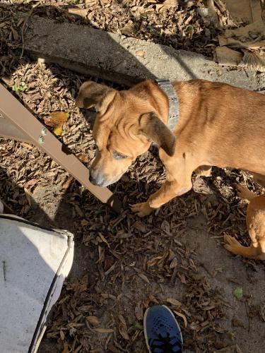 Found/Stray Male Dog last seen ODU 41st street, Norfolk, VA 23529
