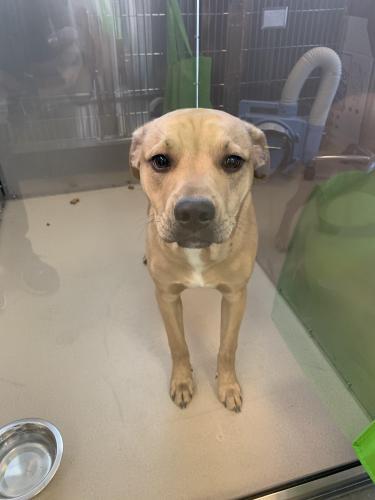 Found/Stray Male Dog last seen W 21st and Hampton blvd   Norfolk Va, Norfolk, VA 23517