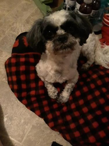 Found/Stray Male Dog last seen E gilpin Avenue , Norfolk, VA 23503