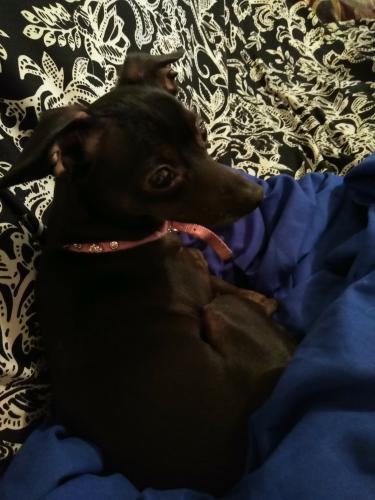 Lost Female Dog last seen Military highway, Virginia Beach, VA 23451
