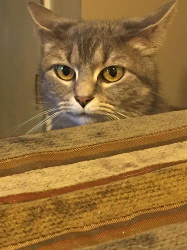 Lost Female Cat last seen Fauquier Place, NN , Newport News, VA 23608