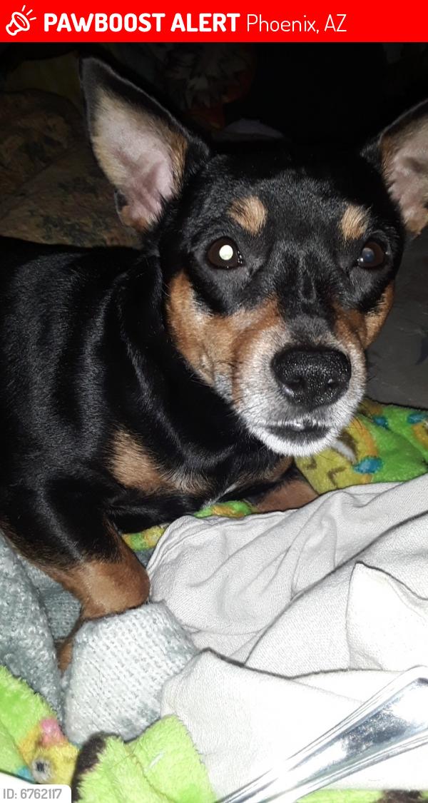 Lost Male Dog last seen 7th street & baseline, Phoenix, AZ 85042