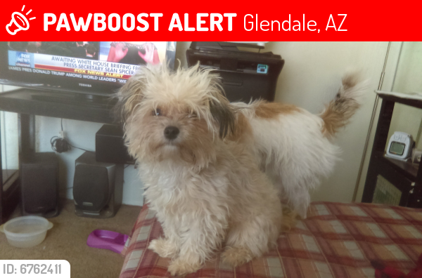 Lost Female Dog last seen McDonald's at 43rd Ave glendale, Glendale, AZ 85304