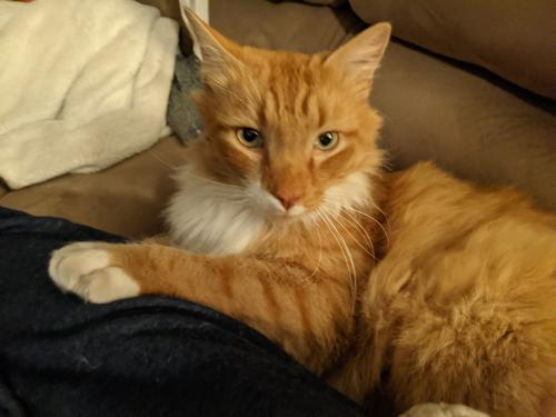 Found/Stray Unknown Cat last seen Aragona Blvd and Witchduck Rd. , Virginia Beach, VA 23455