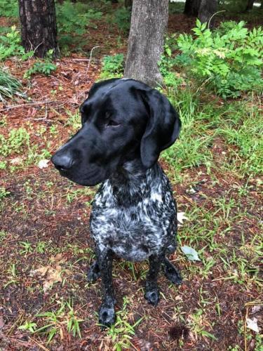 Lost Female Dog last seen Hickory/Taft/ Pleasant Ridge , Chesapeake, VA 23322