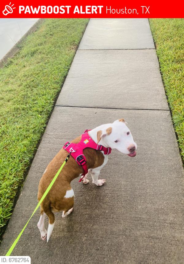 Lost Female Dog last seen Falling River , Houston, TX 77095