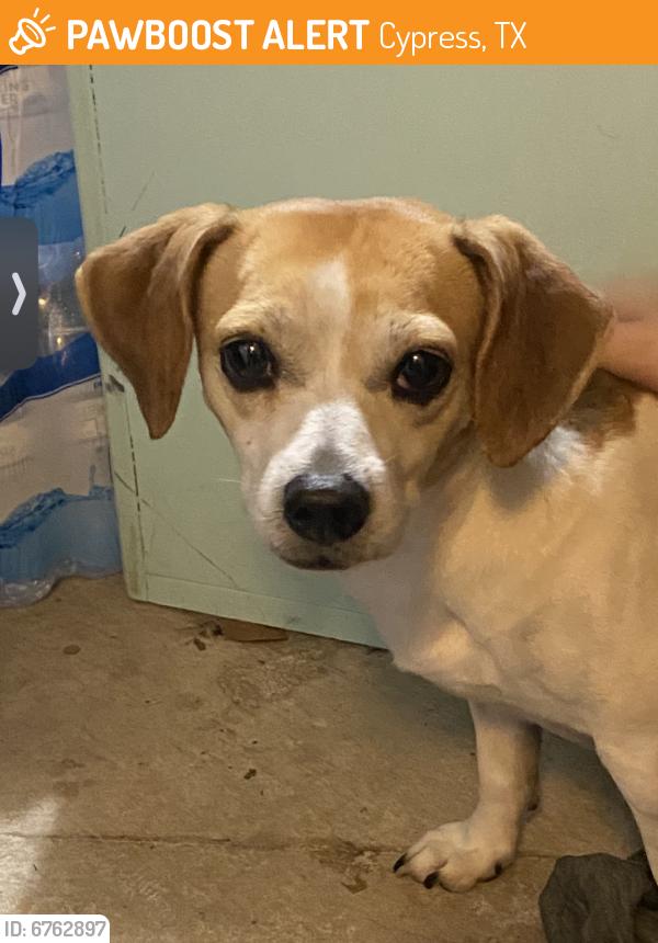 Found/Stray Female Dog last seen Near the pond in Fairwood , Cypress, TX 77429