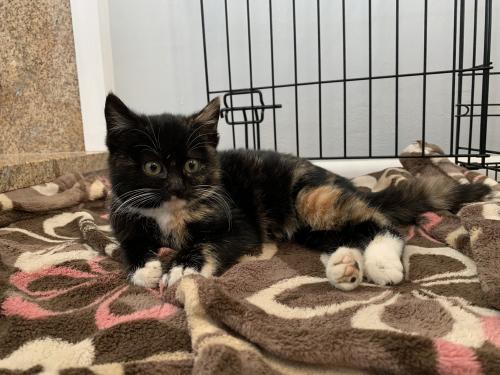 Lost Unknown Cat last seen Three Oaks Neighborhood, Virginia Beach, VA 23456