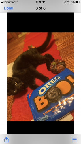 Lost Male Cat last seen Main st. West Winfield,ny, West Winfield, NY 13491