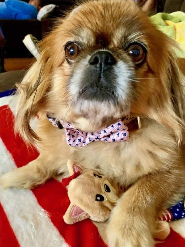 Lost Female Dog last seen Kempsville Rd and princess Anne, Virginia Beach, VA 23462