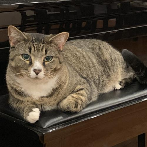 Lost Male Cat last seen Fort Hamilton Pkwy, by Leif Ericson Park, Brooklyn, NY 11220